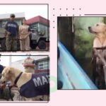Dog rescued during Mexico flood gets hired by Navy for their search and rescue team